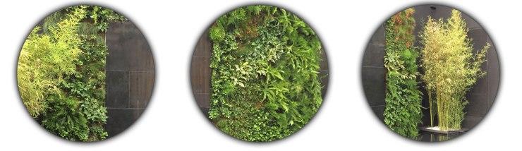 principal-muro-verde